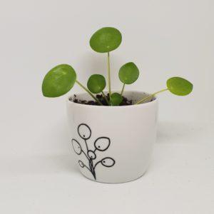 Pannenkoekenplantje