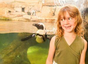 pinguïns in nausicaa