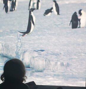 Antarctica in het museum voor natuurwetenschappen